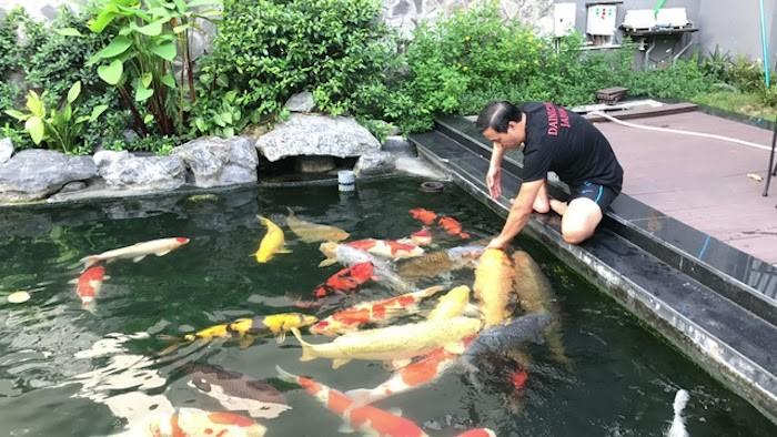 Việt Hoa Viên là đơn vị thiết kế thi công hồ cá uy tín