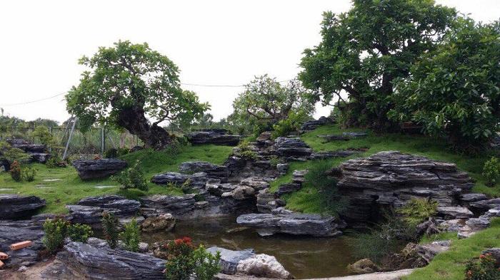 Công trình hồ cá Koi đẹp với đá trang trí