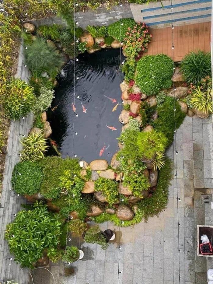 Chiêm ngưỡng vẻ đẹp hồ cá Koi bên hông nhà
