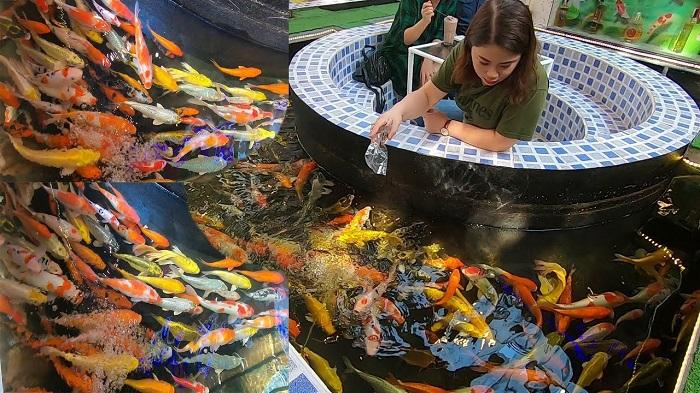 Quán cà phê hồ cá Koi cực đẹp ở Sài Gòn