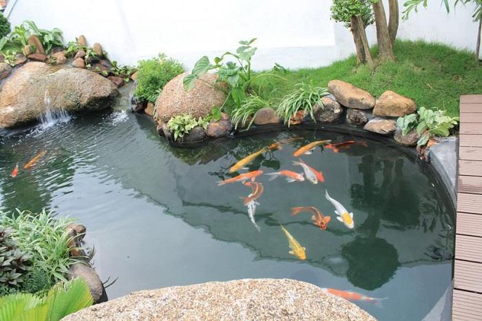 Mẫu hồ cá Koi mini đẹp ở quận 2