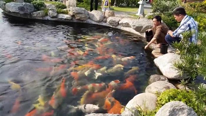 Kiệt tác hồ cá Koi của Hoài Linh