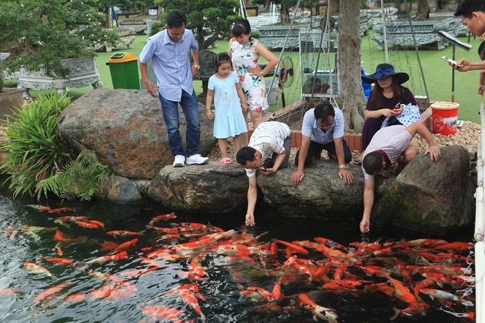 Thiết kế hồ cá Koi Dũng Tân