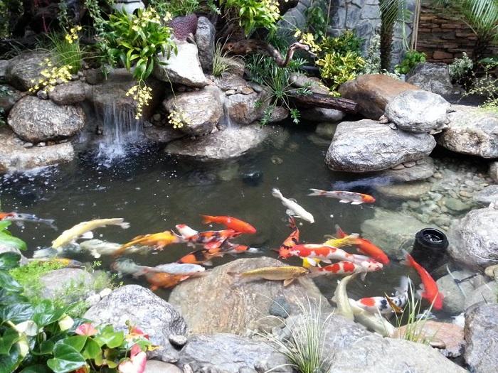 Mẫu hồ cá Koi 3 khối