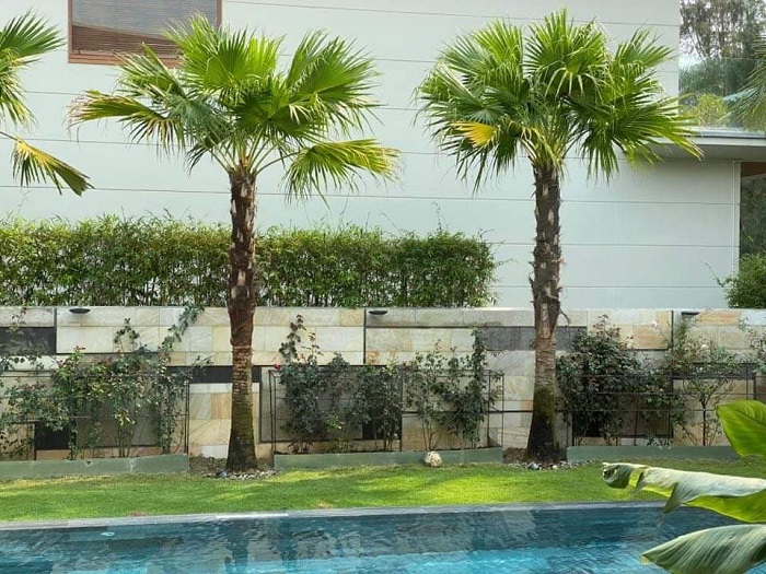 Cung cấp giải pháp trồng cây xanh, cảnh quan sân vườn