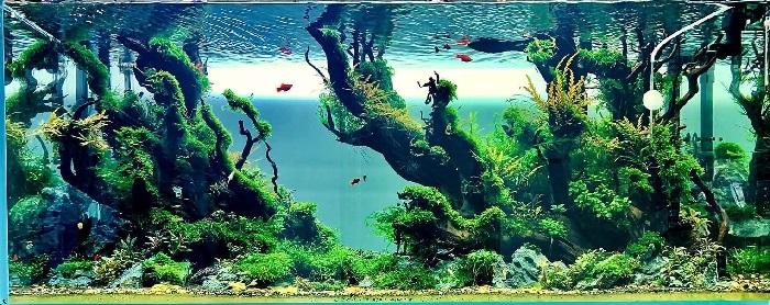 Mẫu hồ thủy sinh số 2 - thủy cung sắc màu